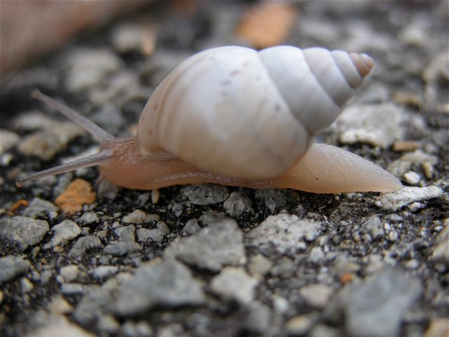 snail-treading.jpg